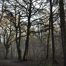 Kohaveskoven