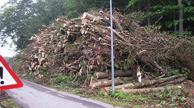 Askesyge i vores skov…