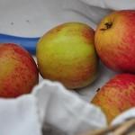 Blangstedgårds eget æble