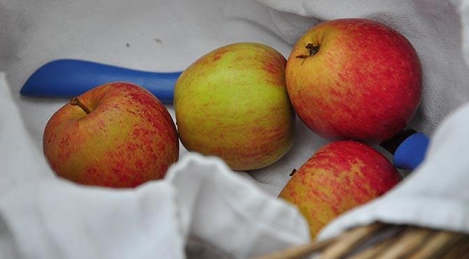 Blangstedgård-æblet vender tilbage
